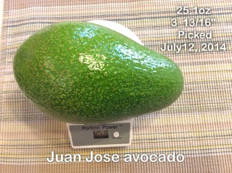 Juan Jose Avocado