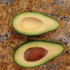 fuerte avocado grown in Florida
